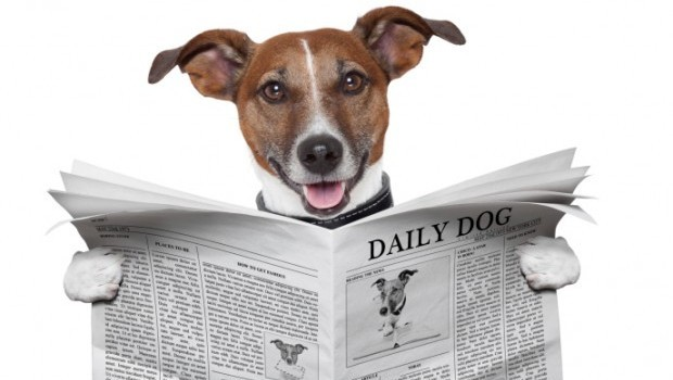 ThinkStock_DogNewspaper-e1369782000876